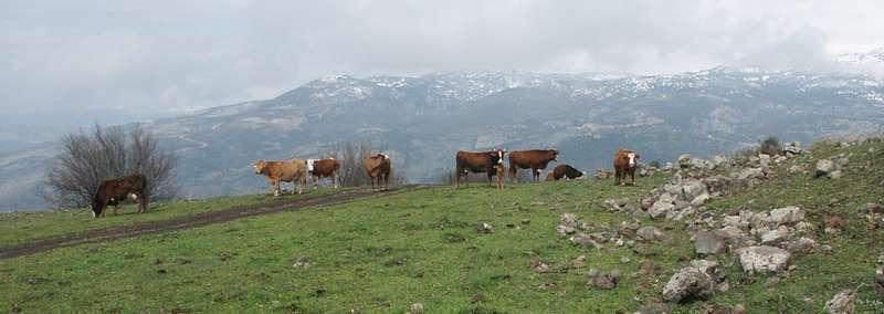 טיול לדרום רמת הגולן